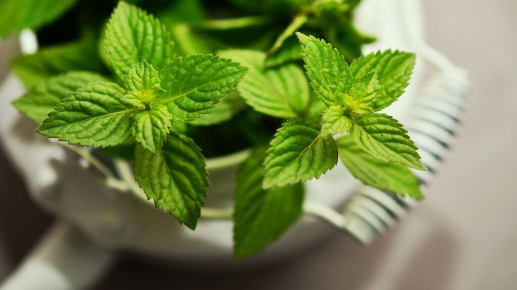 reduce testosterone mint